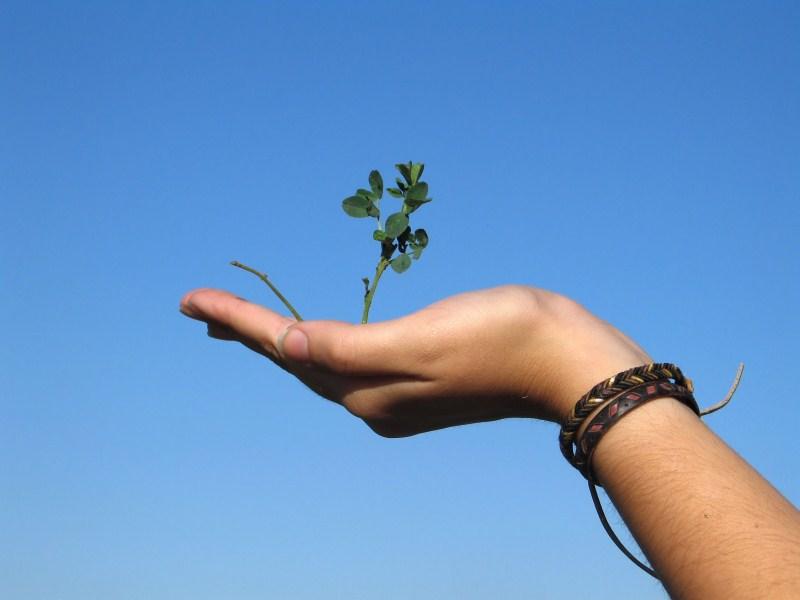 bloem groeit in hand